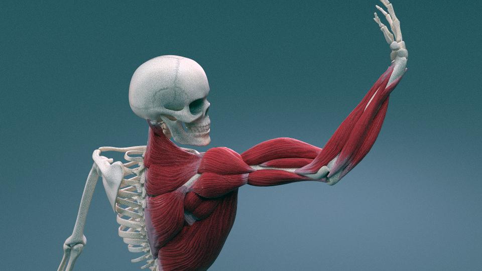 Blender мышцы, devgam, девгам