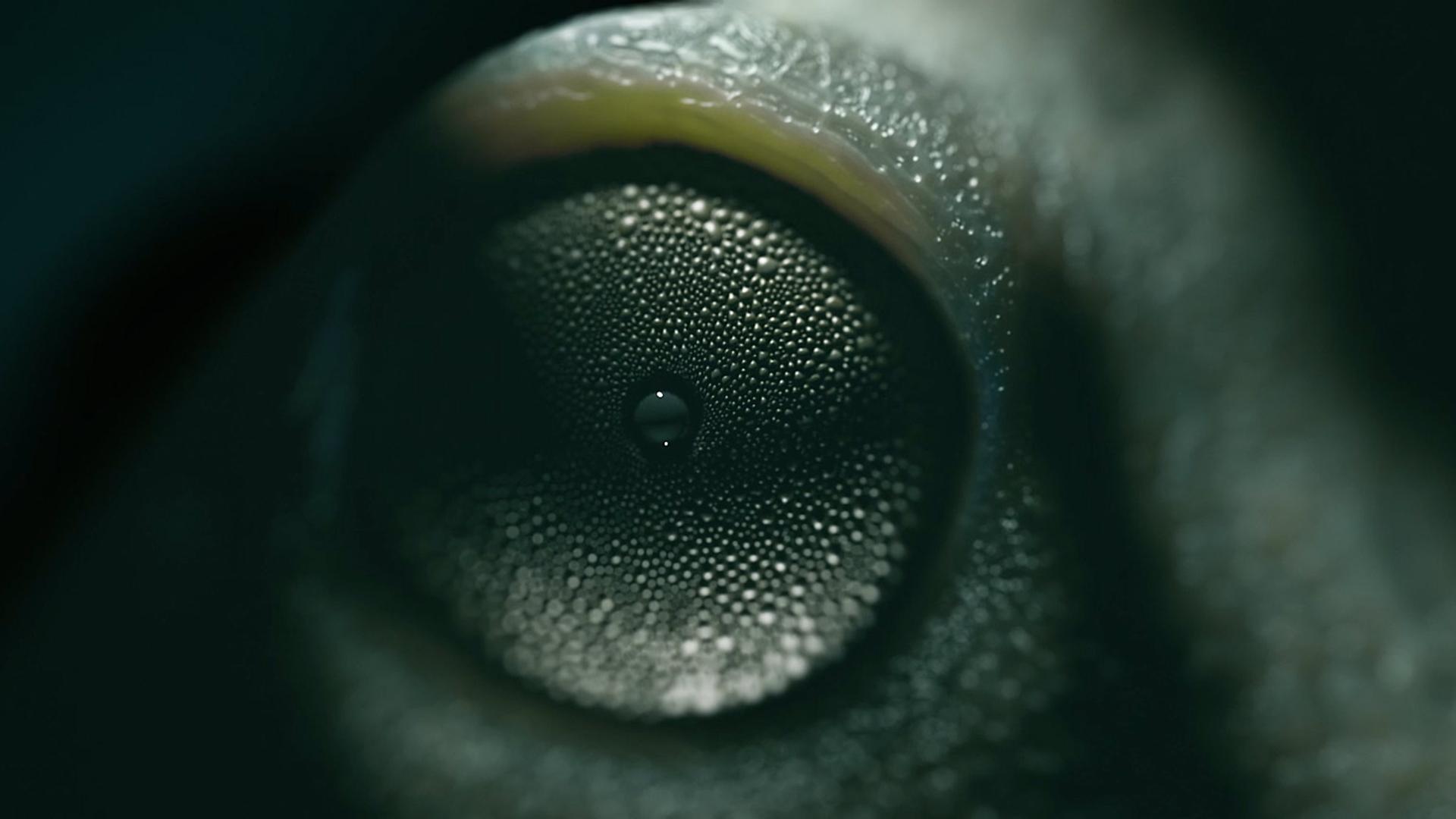 Анонсирован Cinema 4D Release 18 MAXON